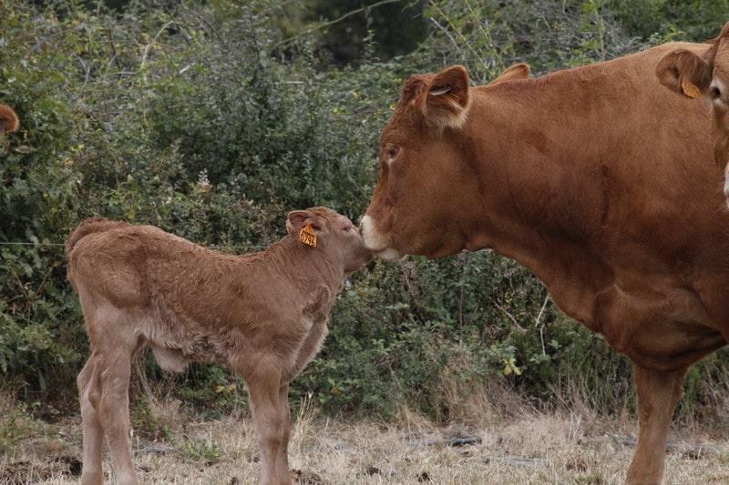 venotis outil gestion santé du troupeau pour les vétérinaires et éleveurs