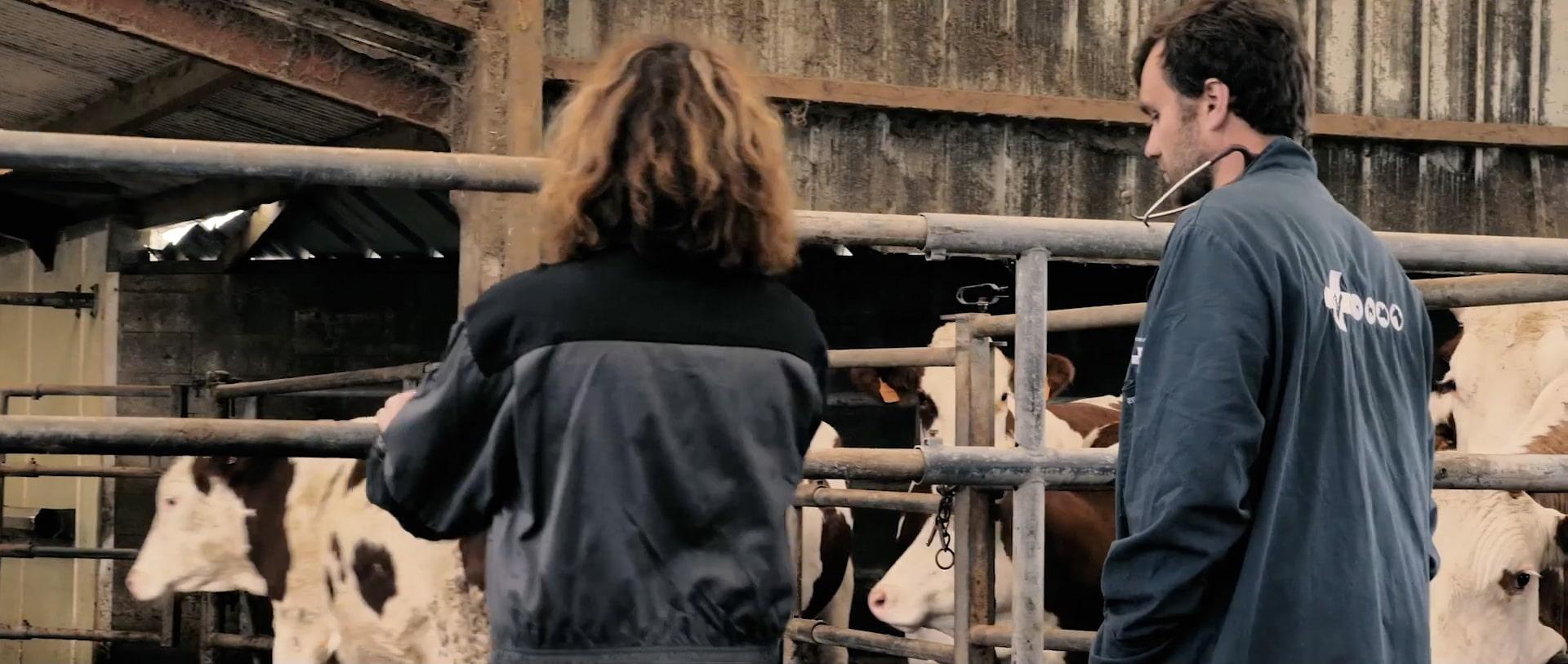 Retours d'experience vétérinaire application santé animale Vénotis